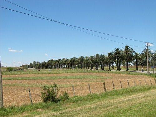 Uruguay Noviembre 2012 - Página 2 IMG_2693_zpse3430b0c