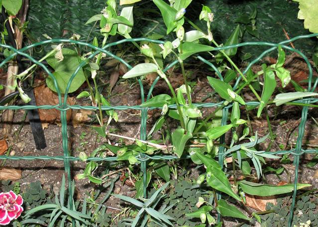 Plantas para dar nombre... y cuidados correctos :) IMG_4030rec