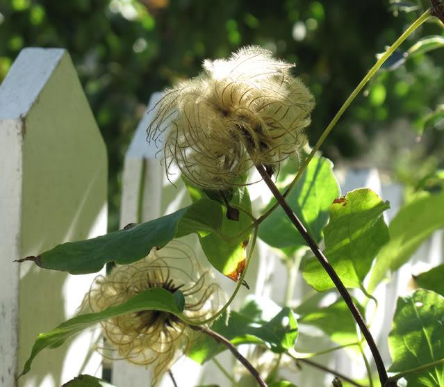 Plantas para dar nombre... y cuidados correctos :) IMG_4039rec