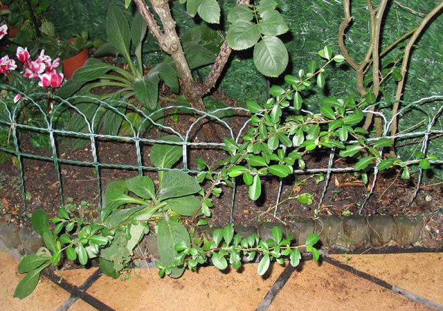 Plantas para dar nombre... y cuidados correctos :) IMG_4103rec