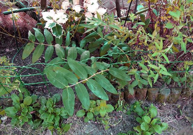 Plantas para dar nombre... y cuidados correctos :) IMG_4111rec