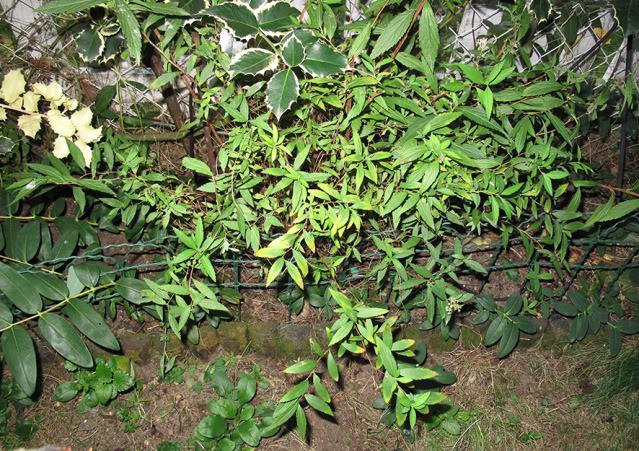 Plantas para dar nombre... y cuidados correctos :) IMG_4115rec