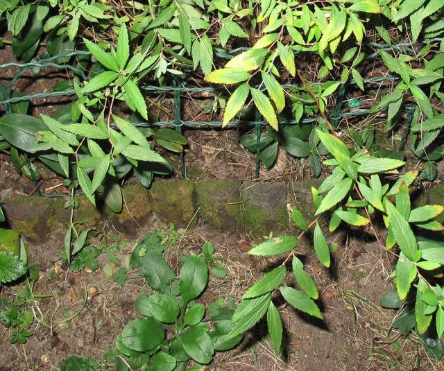 Plantas para dar nombre... y cuidados correctos :) IMG_4115recrec01