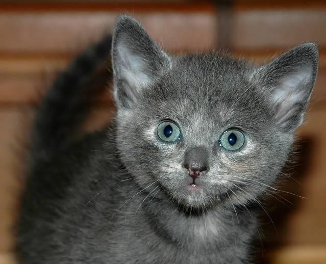La gata mas fea :) DSC_3182rec