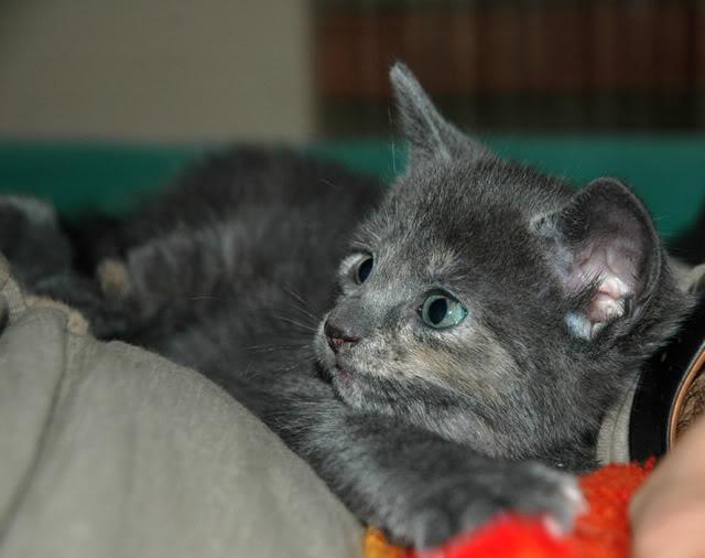 La gata mas fea :) DSC_3192rec