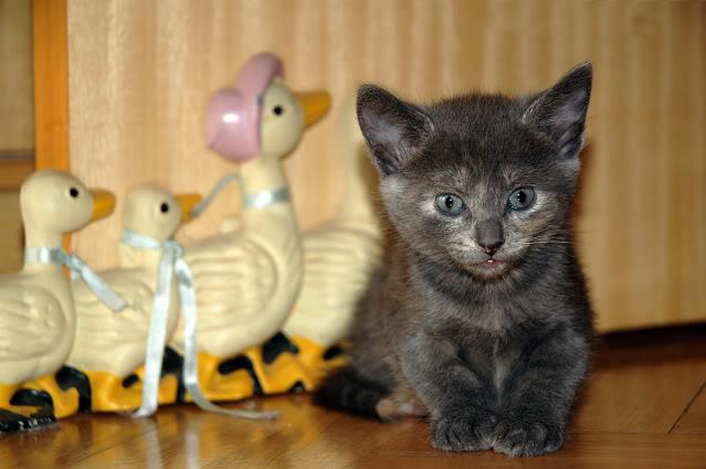 La gata mas fea :) DSC_3236rec