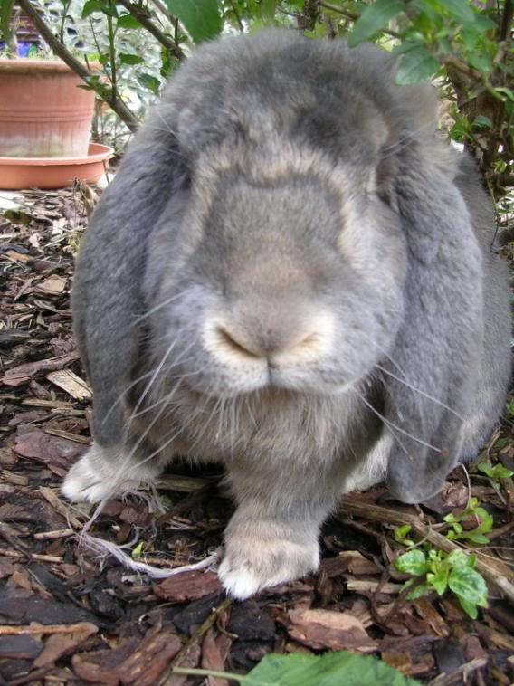 Forum Members Rabbits DSCN1100