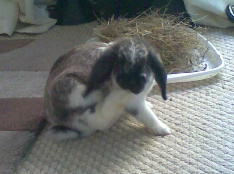 Forum Members Rabbits Image078-1