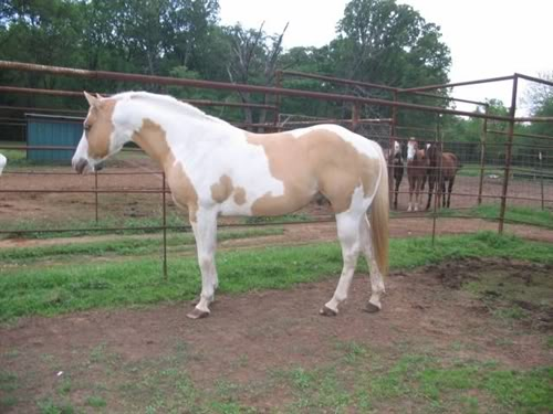 My Horse Characters.PoS 400_1664_march20200720012