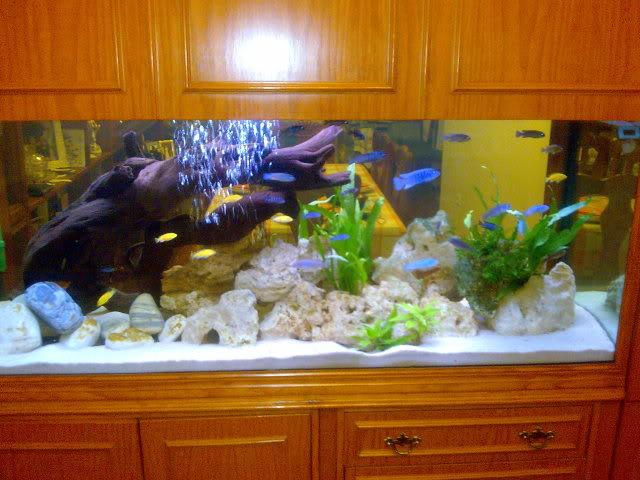 Mi 450 litros y algunas especies. Imagen085
