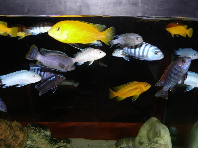 Mi 450 litros y algunas especies. L1020451