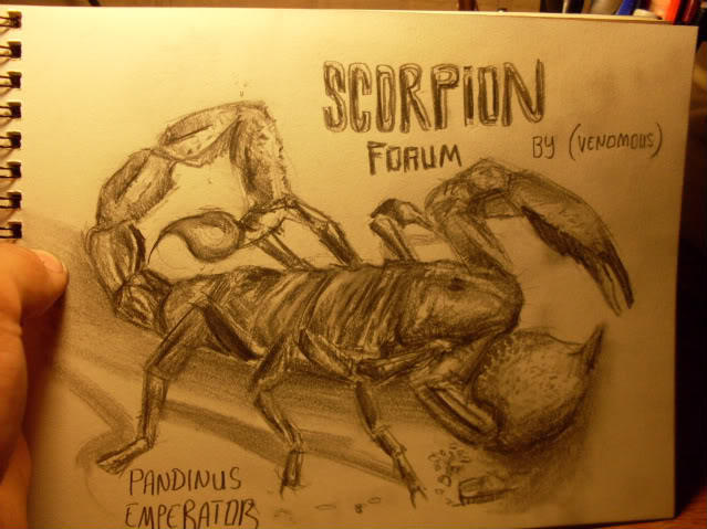 ScorpionForum Art Contest II SDC10518-1