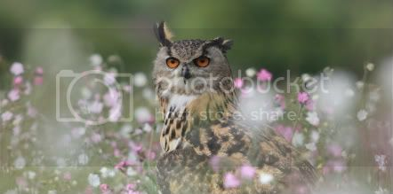 Buzón de Random, person  Owl_in_meadow_flowers_by_AngiNelson-1-1