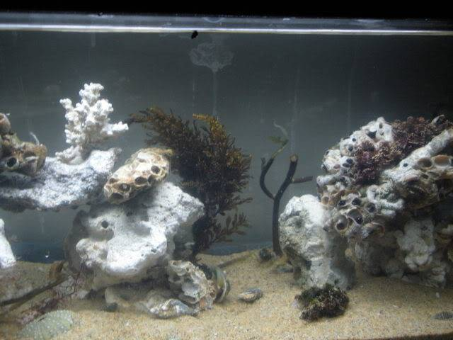Coldwater Marine Aquaria - Going to see how this works out. CenterTS