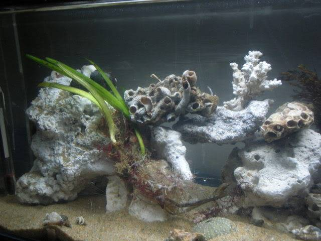 Coldwater Marine Aquaria - Going to see how this works out. RightSideTS