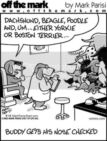 Canine humour.... Dog8