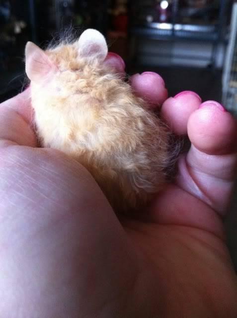 3 new mice 11aed4ea