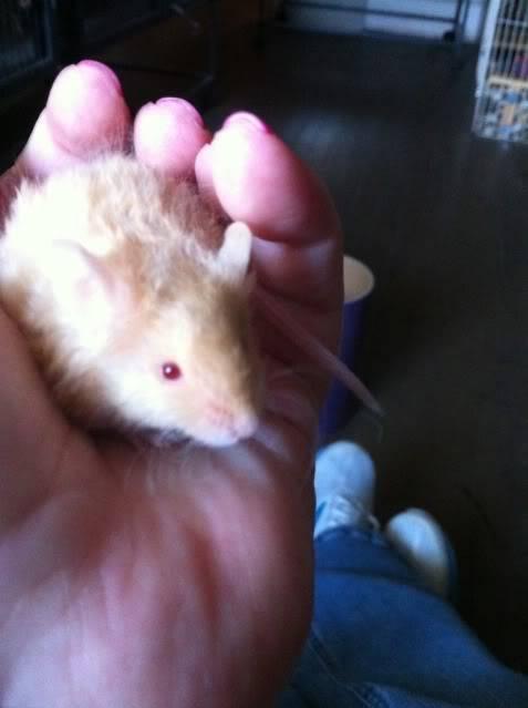 3 new mice 7f2e0e26