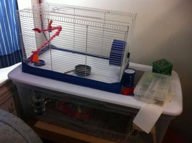 3 new mice IMG_0236