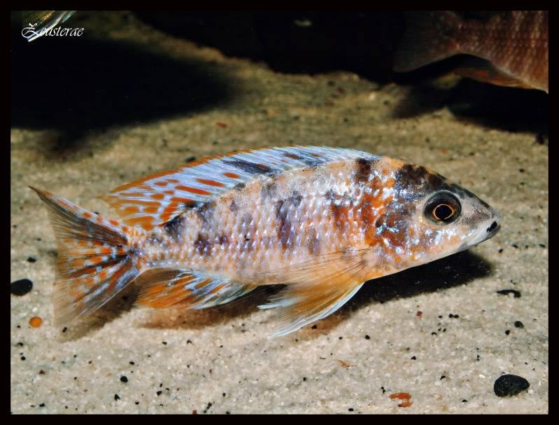 Mi acuario y peces DSCF4197