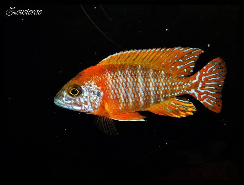 Mi acuario y peces DSCF3082copia