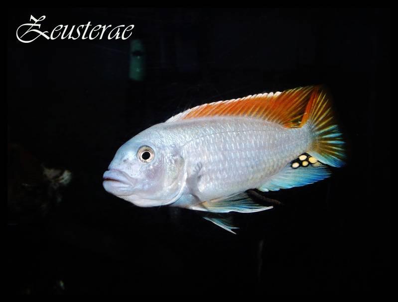 Mi acuario y peces DSCF3251copia