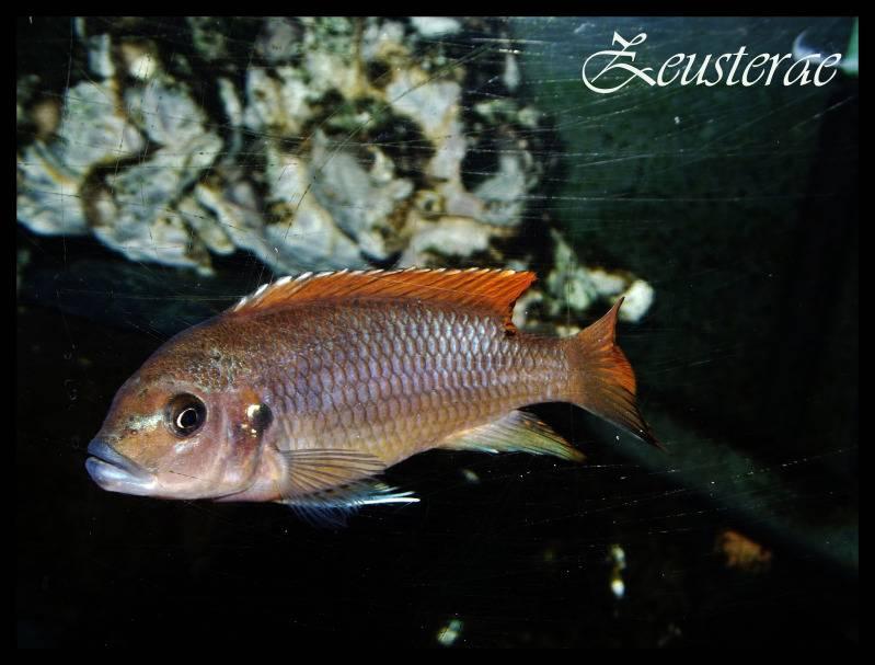 Mi acuario y peces DSCF3253