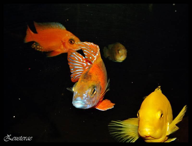Mi acuario y peces DSCF3466-1