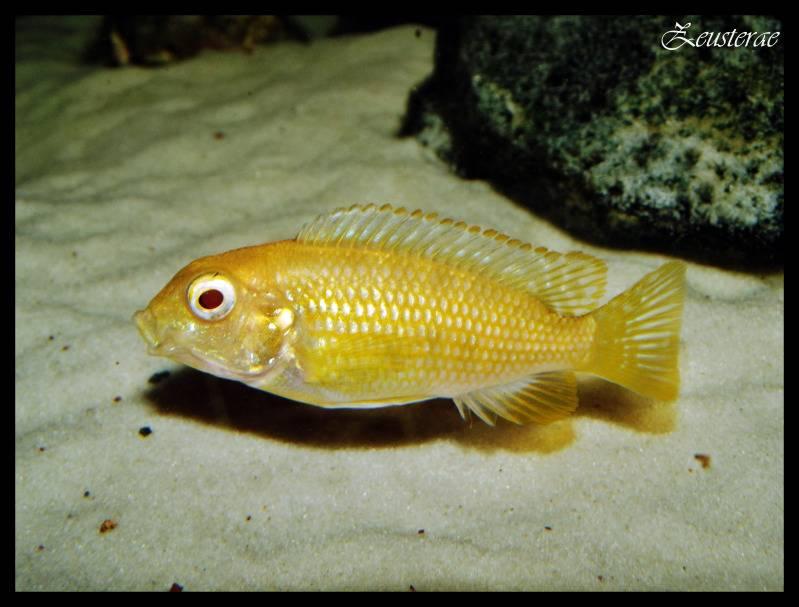 Mi acuario y peces DSCF3496copia