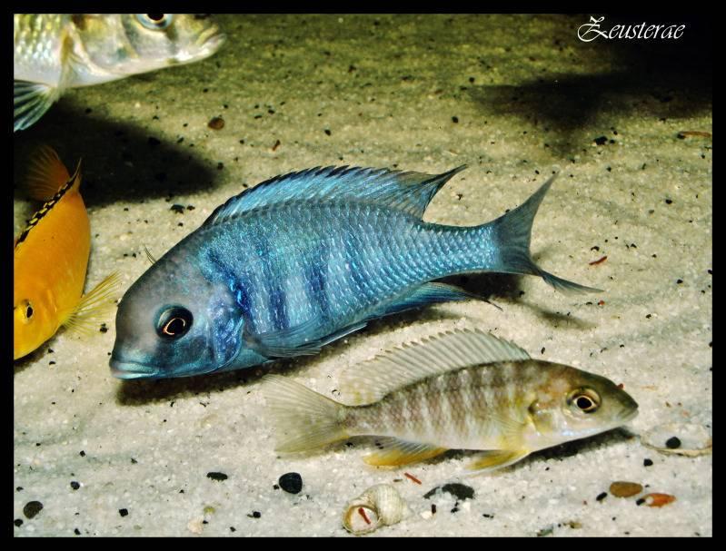Mi acuario y peces DSCF3520-1