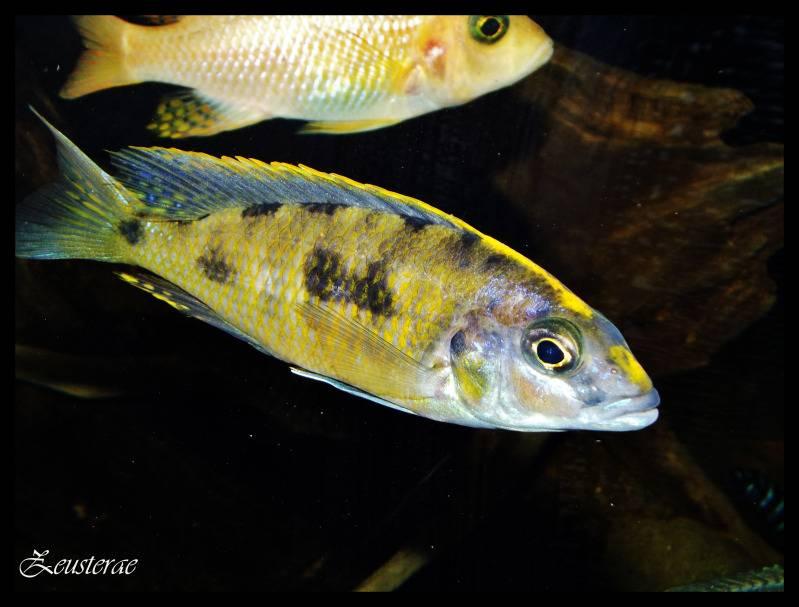 Mi acuario y peces DSCF3686
