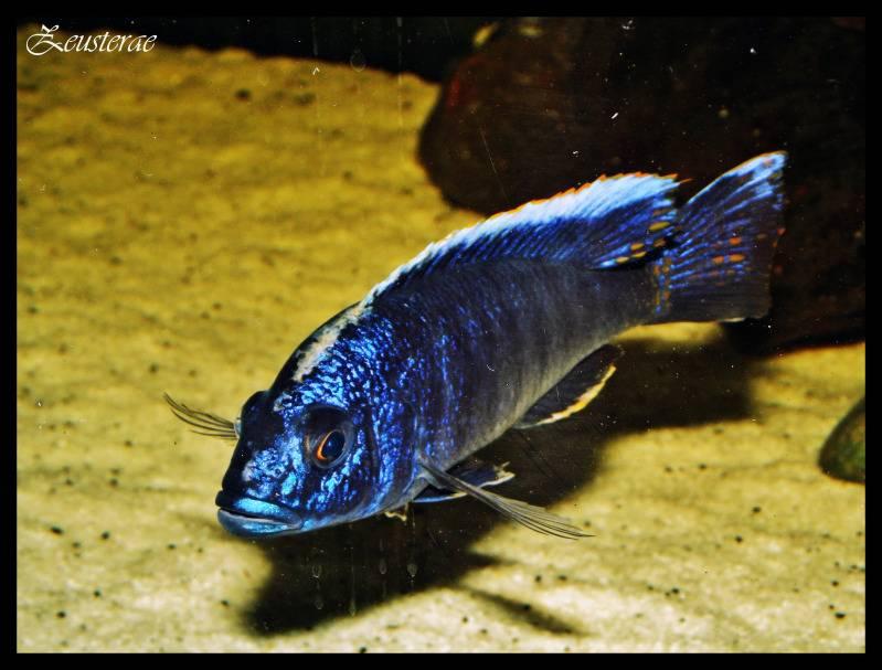 Mi acuario y peces DSCF3724-1