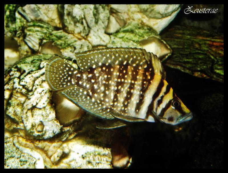 Mi acuario y peces DSCF3865-1