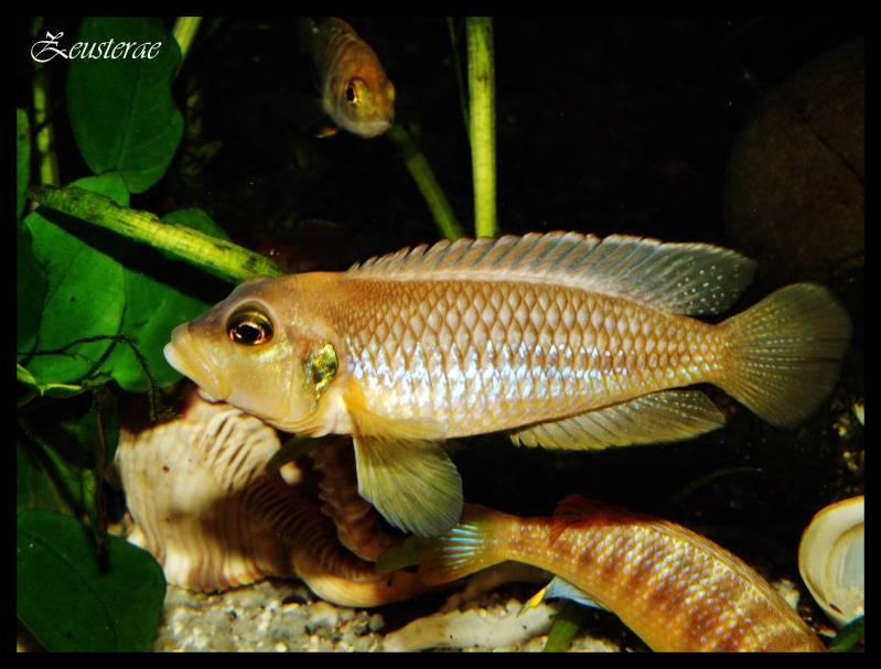 Mi acuario y peces DSCF3874