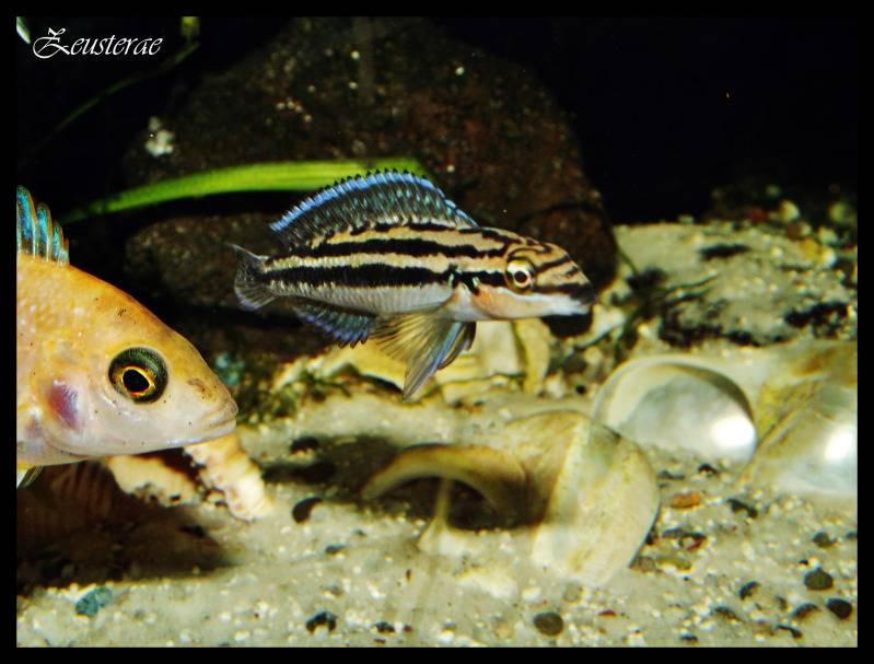 Mi acuario y peces DSCF3913