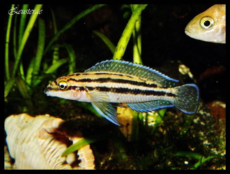 Mi acuario y peces DSCF3918