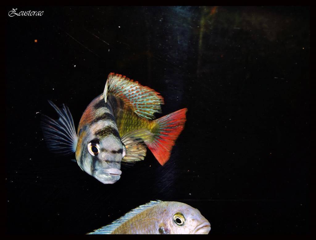 Mi acuario y peces DSCF3989