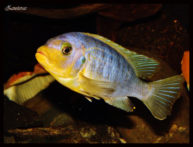 Mi acuario y peces DSCF4171