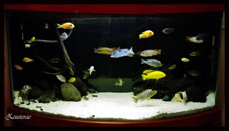 Mi acuario y peces DSCF4182