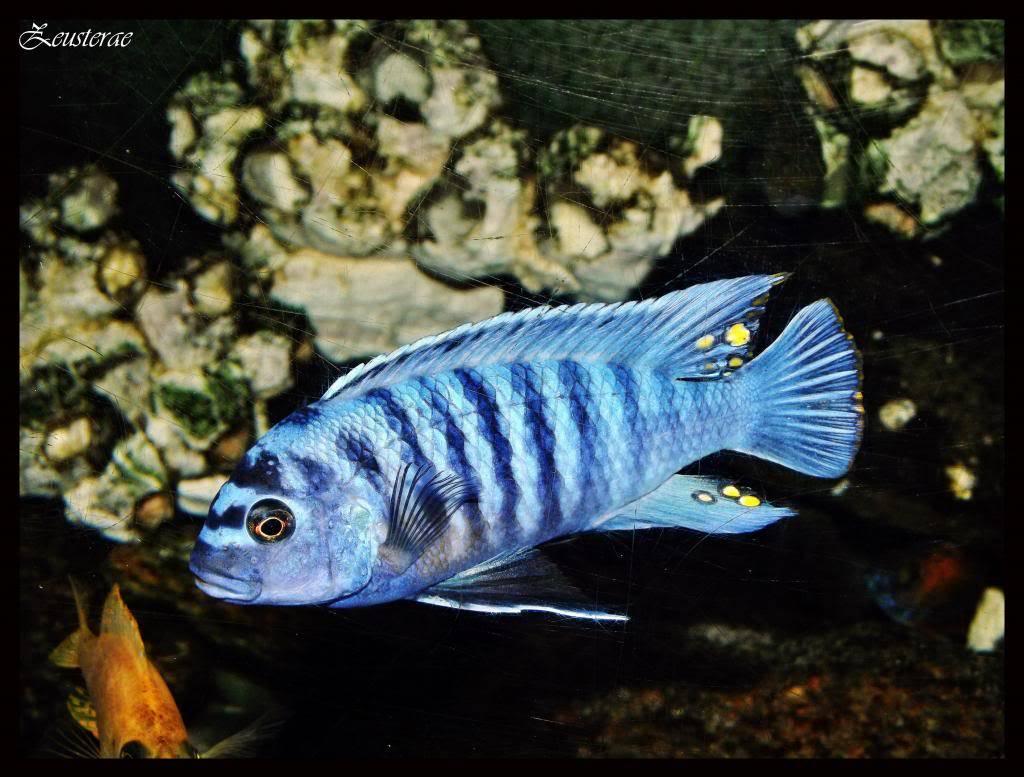 Mi acuario y peces DSCF4233