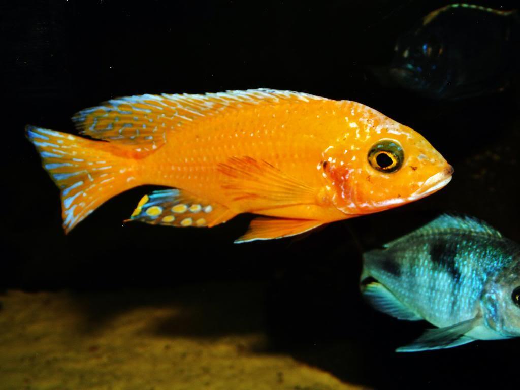 Mi acuario y peces DSCF4298
