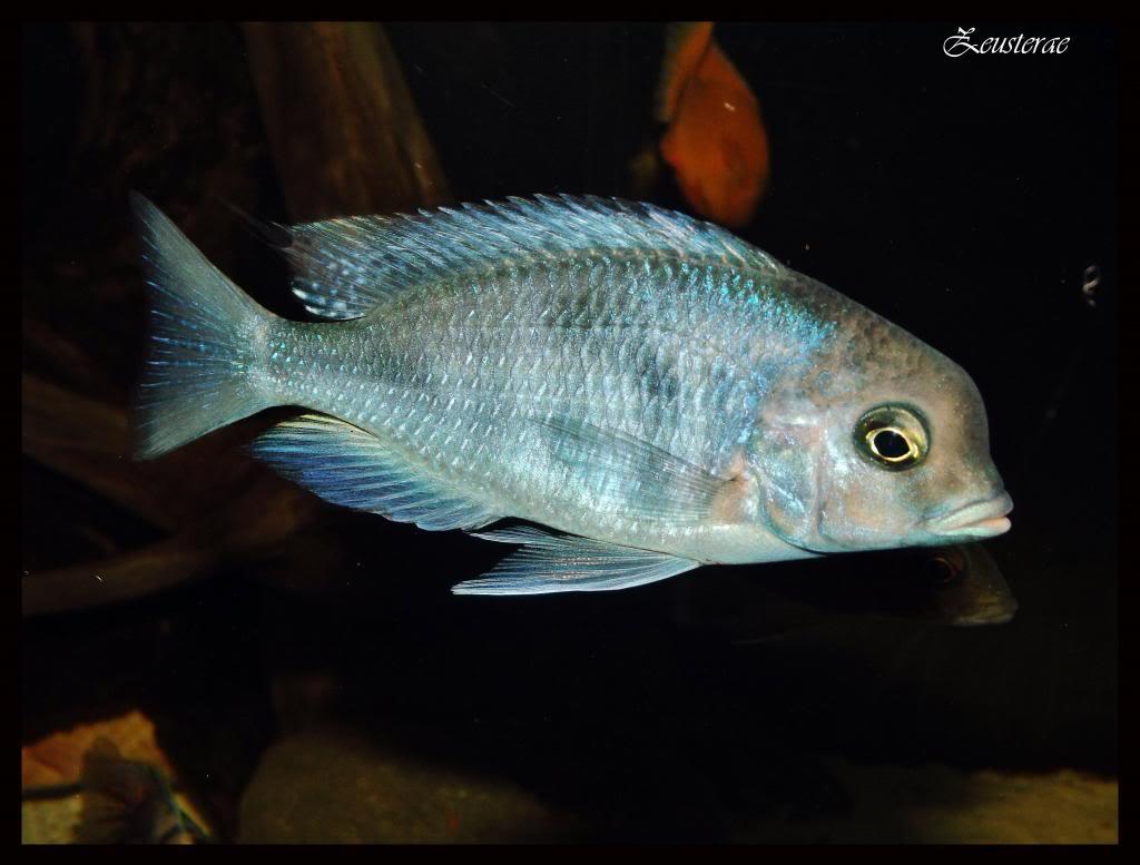 Mi acuario y peces DSCF4314