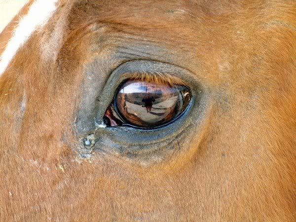 Il topic delle immagini Horse