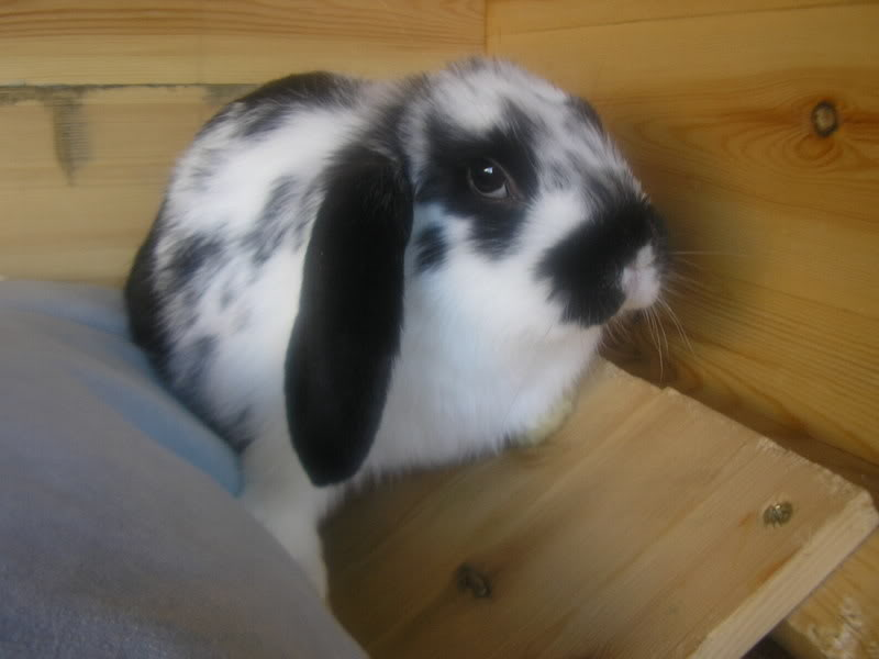 Forum Members Rabbits - Page 2 BabyRhia2