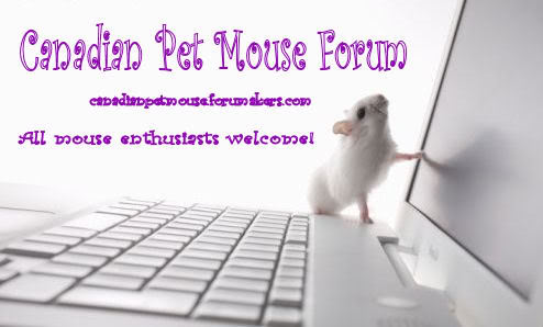 Canadian Pet Mouse Forum