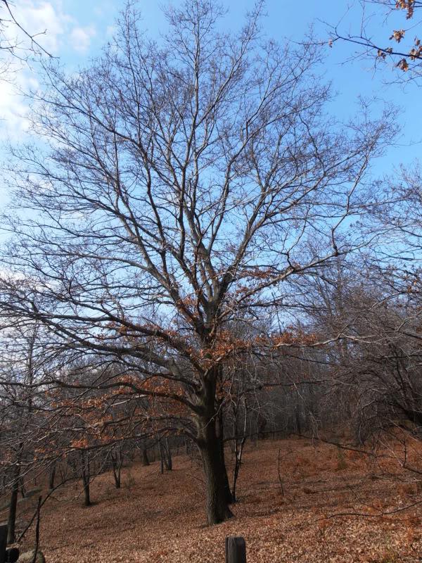 Immagini dal bosco P1180008