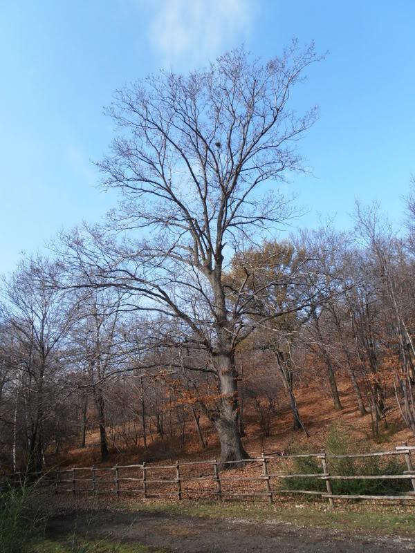 Immagini dal bosco P1180011