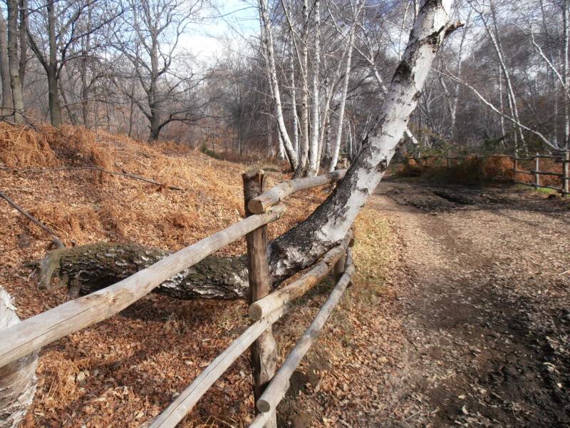 Immagini dal bosco P1180013