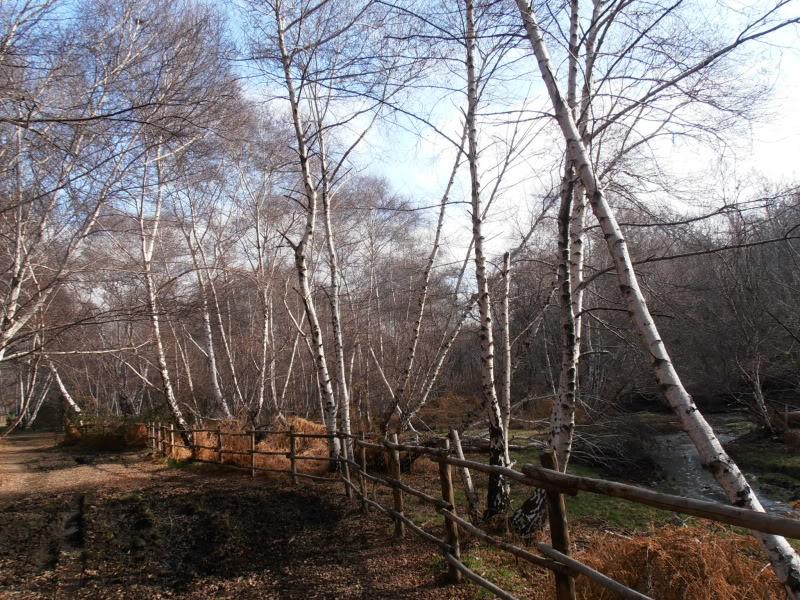 Immagini dal bosco P1180014