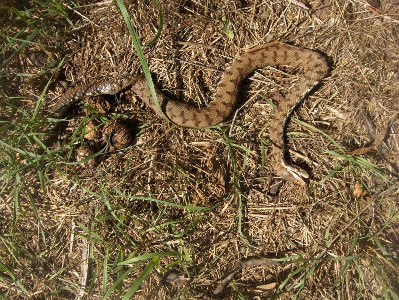 serpente misterioso HPIM3069